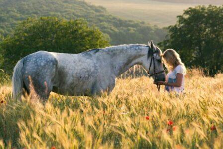 cropped pferd im feld scaled e1596359675898.jpeg