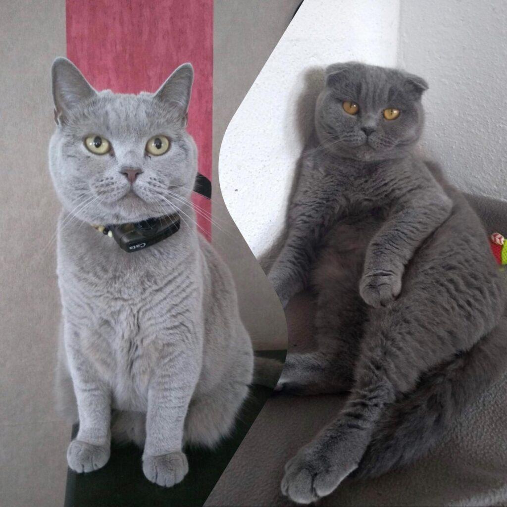 Suri & Masha